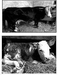 Vânzări Animale