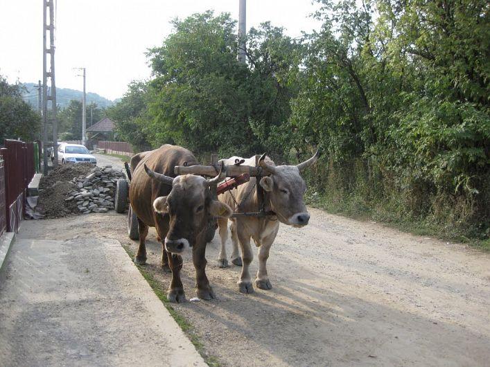 Car cu boi.Foto:Mapio.net