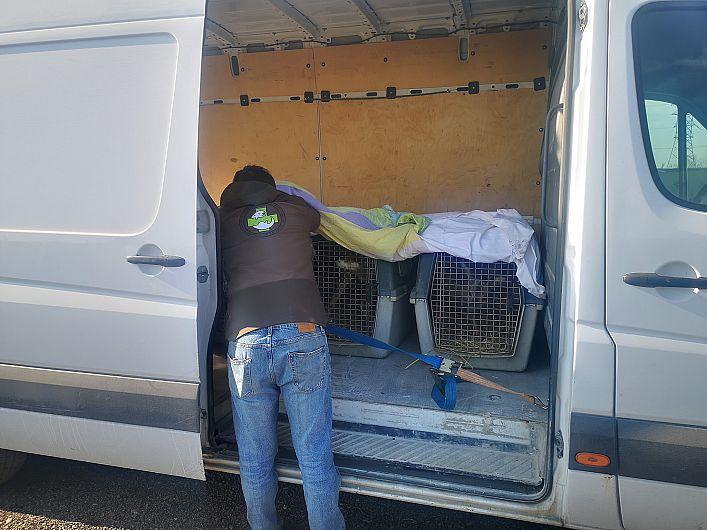 Foto: Cele trei exemplare de căpriori au fost aduse la ADCB Vrancea. Sursă foto: TOTALL - Materiale de Construcții Moreni - pagina de Facebook