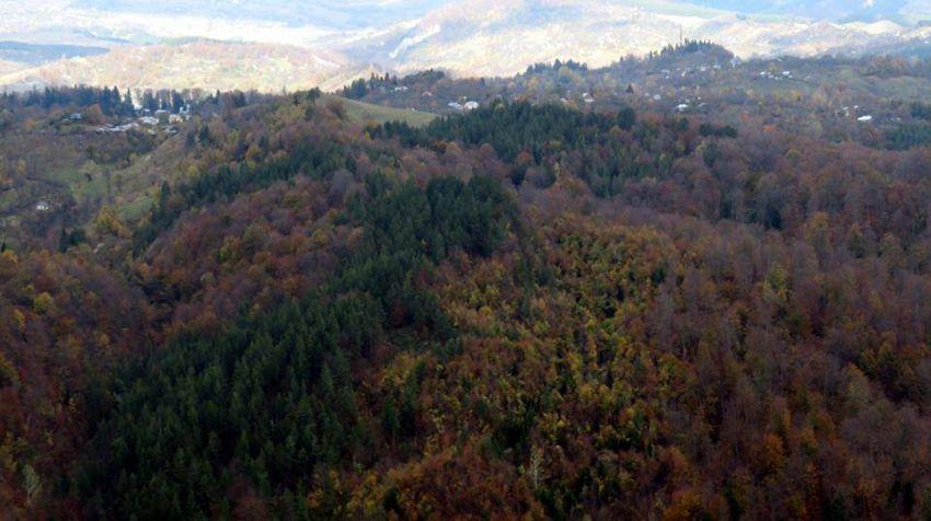 Vegetaţia lemnoasă a pădurilor este formată în cea mai mare parte din fag (Fagus sylvatica), brad (Abies alba) şi molid (Picea abies).-foto:Pantelimon Sorin