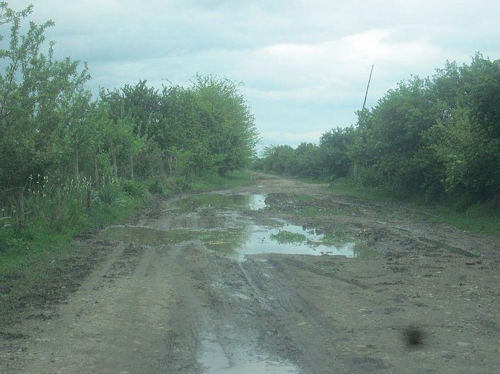 Foto 1 drum din Bogza la pășunea satului