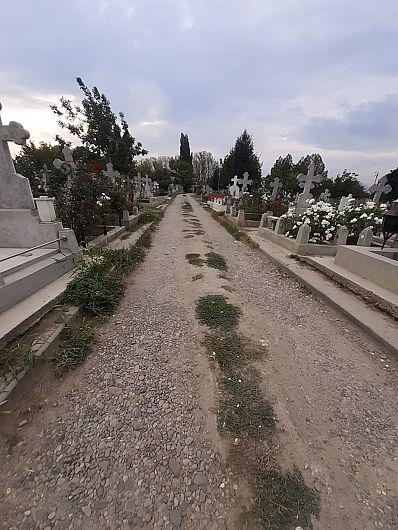 Foto Deși aleile printre morminte ar trebui să fie aranjate, în Cimitirul Sudic, morții nu se pot odihni de... bălării și mizerie