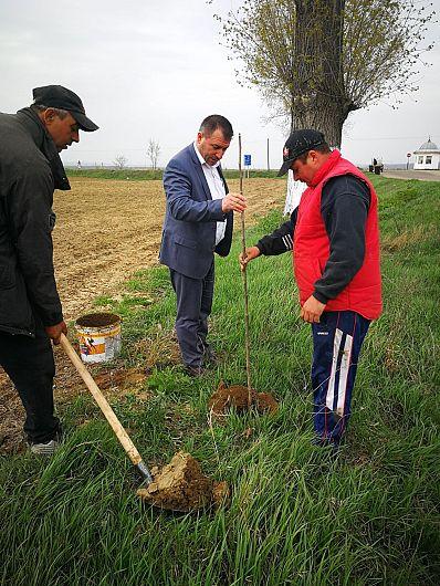 Foto: Primarul a supervizat lucrările de plantare