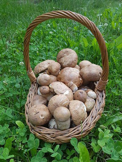 Foto și recoltă( din pădurile Sovejei)-Daniel Isac