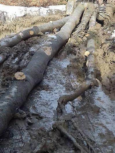 Tăierile rase pe suprafeţe mari au dezavantajul de a favoriza eroziunea pe terenurile in pantă, de a deregla ciclul bioelementelor, de a tulbura brusc bioclima din apropierea solului şi alte consecinţe rezultând din modul exploatării, scoaterii lemnului, folosirii maşinilor, etc.-Foto 7:Pantelimon Sorin
