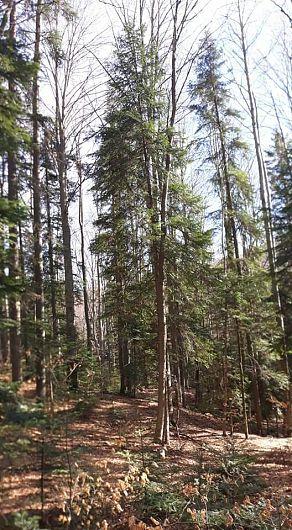 Pădurile reduc până la 62% din viteza vântului, ce duce cu el o parte din umezeala solului, pe care îl usucă îl spulberă.-Foto 11:Pantelimon Sorin