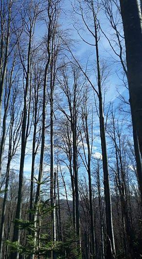 În urma despăduririi, frecvența viiturilor crește de 4 ori, timpul până la apariția vârfului viiturii scade sub jumătate, iar debitul maxim crește de 7 ori.-Foto 10:Pantelimon Sorin