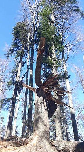 Intervenţia brutală în structura echilibrată a ecosistemului forestier prin tăierea rasă a pădurii, duce la creşterea scurgerii totale cu 40 % în primii ani de după tăierea pădurii.-Foto 9 :Pantelimon Sorin
