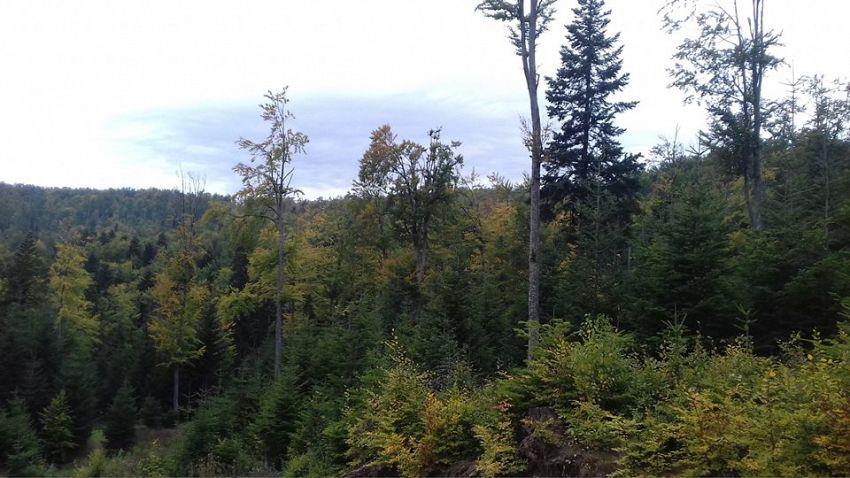 Rolul fizico-geografic al pădurilor se manifestă în câteva direcţii: geomorfologic, climatic, asupra solului, hidrologic, asupra culturilor agricole, asupra sănătății oamenilor și un rol social.-Foto 5:Pantelimon Sorin