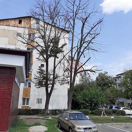 Solicitările vechi de 4 ani de zile ale Asociației de proprietari nr 558 Focșani, str Aleea Echității nr 1 bloc C, scara 4, privind toaletarea copacilor din apropierea blocului, sunt tratate cu nepăsare și dezinteres de conducerea Direcției de Dezvoltare Servicii Publice a PrimărieiFocșani