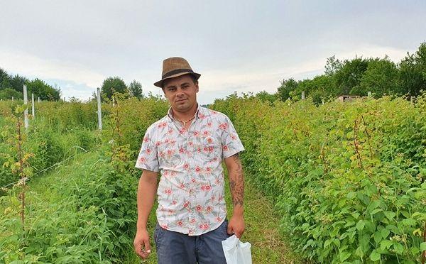 Vrânceanul Alex Ciobotaru deţine, o plantaţie de zmeur în suprafaţă de 1,2 hectare, aflată în al patrulea an de la înfiinţare, şi 3.000 mp de teren cu puieţi în satul Verdea, comuna Răcoasa.Foto:revista-ferma.ro