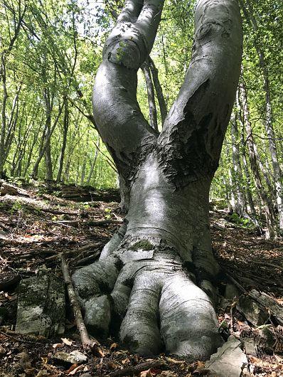 Foto:Vrancea neștiută-Muntii Vrancei sculptura naturală